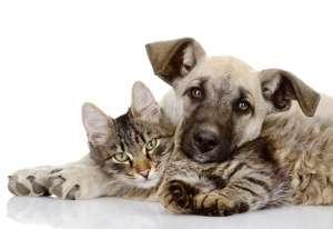 猫咪狗狗世界惊奇大纪录